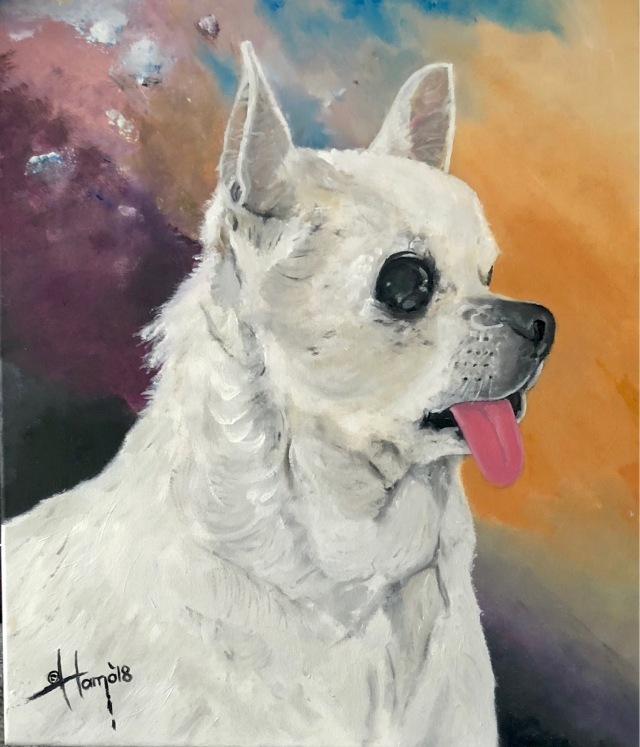 portret chihuahua